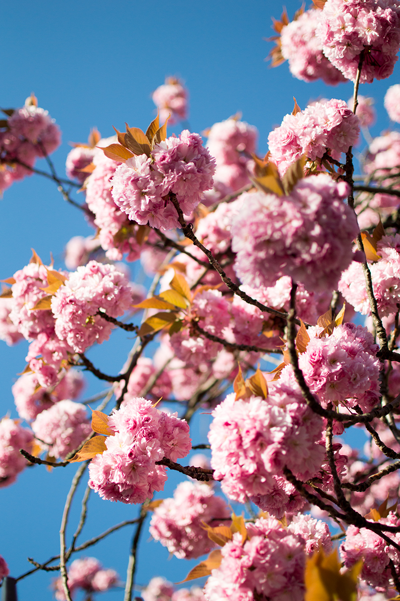 stoke-newington-london-photo-walk-photography-lifestyle-blog-bloomzy-cherry-blossom