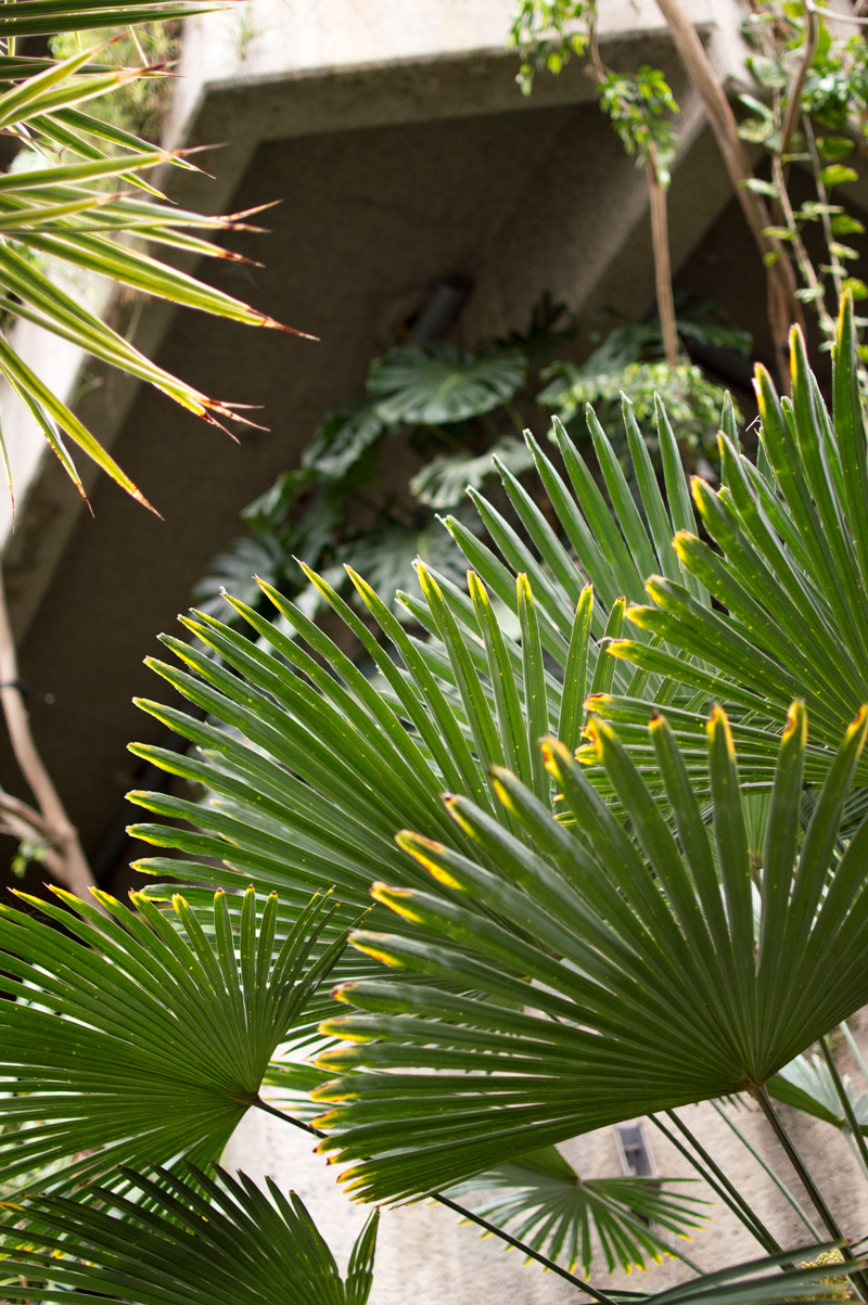 a-london-life-barbican-centre-conservatory-tropical-exotic-plants-5