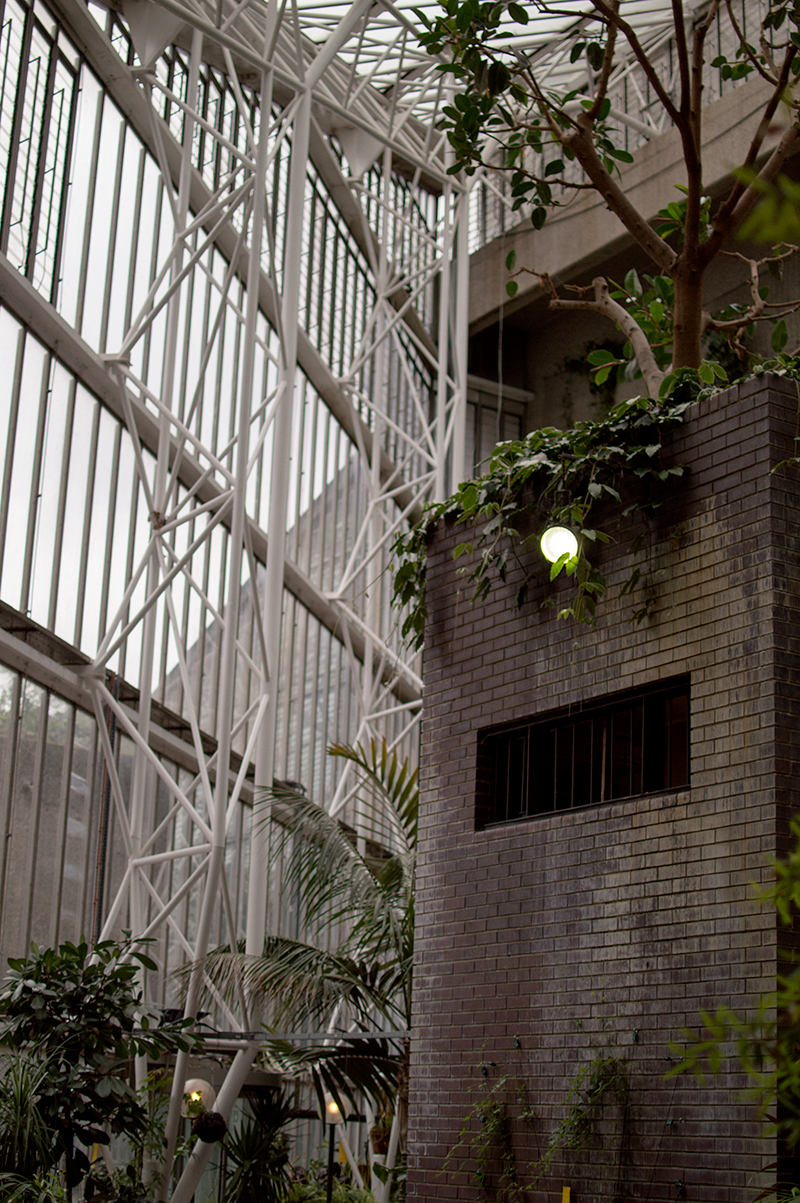 a-london-life-barbican-centre-conservatory-tropical-exotic-plants-8