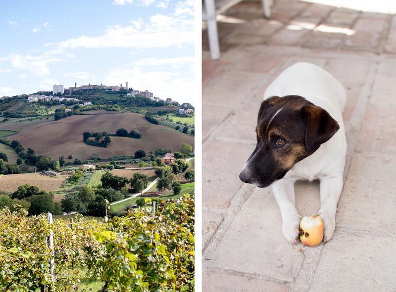 italy-travel-diary-marche-fermo food Rio Maggio Winery