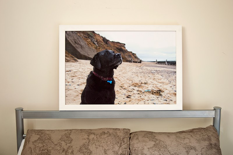 print-foundry-canvas-photo-photograph-bloomzy-1